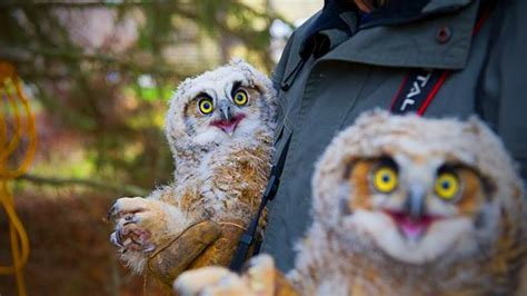 Amazing Funny Owls 🦉😂 Cute and Funny Owls Playing (Full