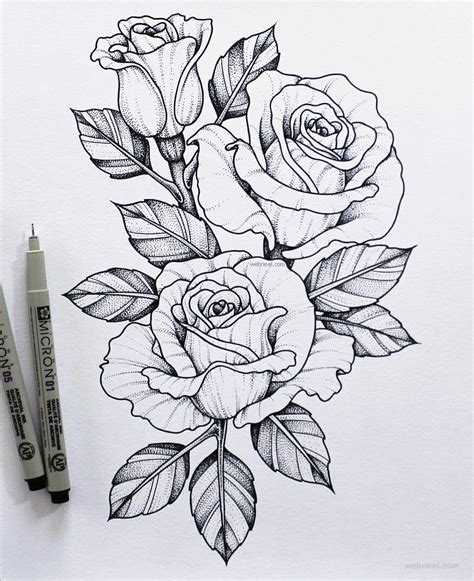 Flower Drawing Rose 2
