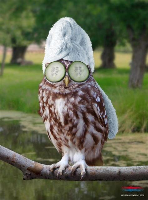 Quotes Funny Owl