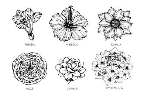 Collection set of flower drawing illustration