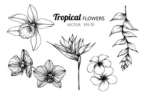Collection set of Tropical flower drawing illustration