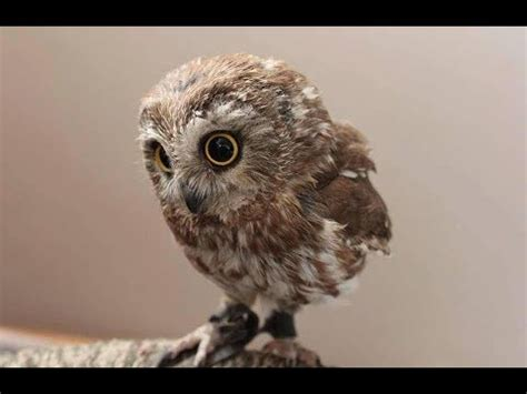 Funny and Cute Owls Compilation - Cutest Owls In The World